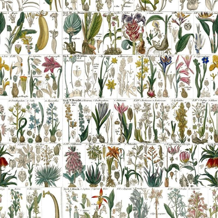 Botanical Prints Debbie McKeegan Cottage Garden