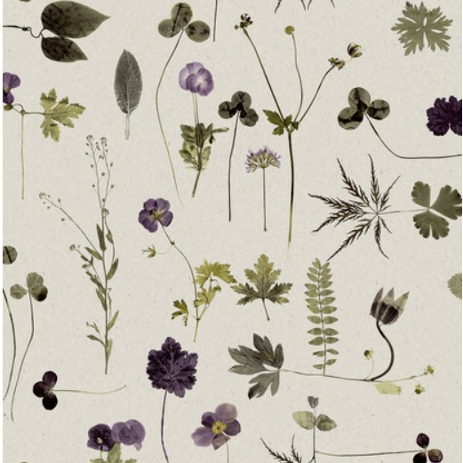 Botanical Prints Botanica wallpaper by Engblad & Co