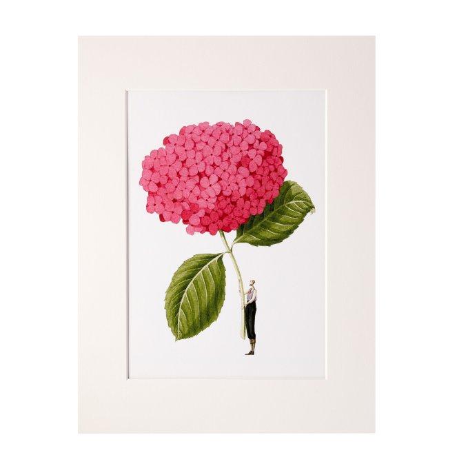 Top Drawer Art Laura Stoddart Pink Hydrangea in Bloom