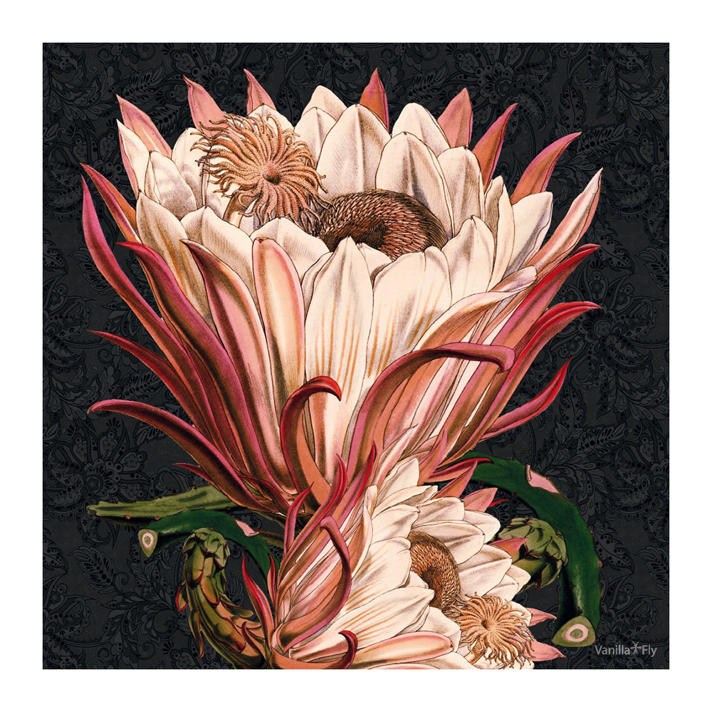 Protea flower print from Vanilla Fly